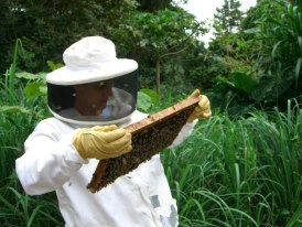 Costa Rica Apiaries